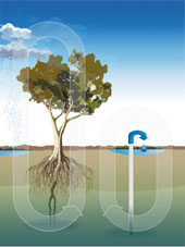 In situ desalination imitates the natural hydrological cycle in the tree pump in a simple way to produce water on demand